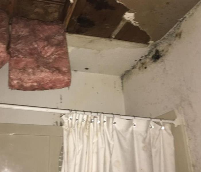 Mold from the Attic