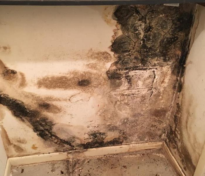 Mold in Brenham!