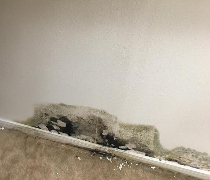 Mold from Leaking pipe!
